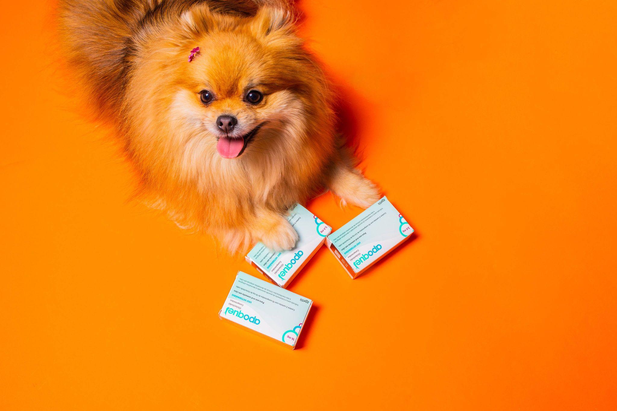 Spitz com caixas de remédio para alergia de cachorro Apoquel