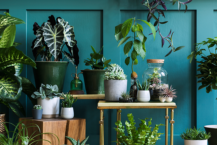 diferentes vasos para plantas variadas
