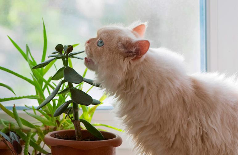 gato comendo plantas não toxicas para pets