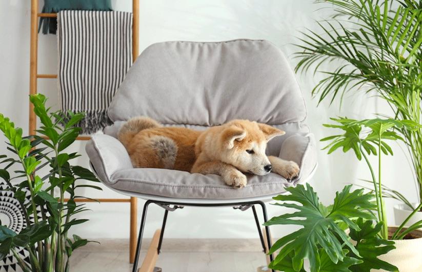 Cachorro deitado na poltrona cercado de plantas