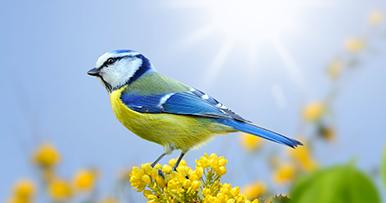 pássaro no calor sob o sol