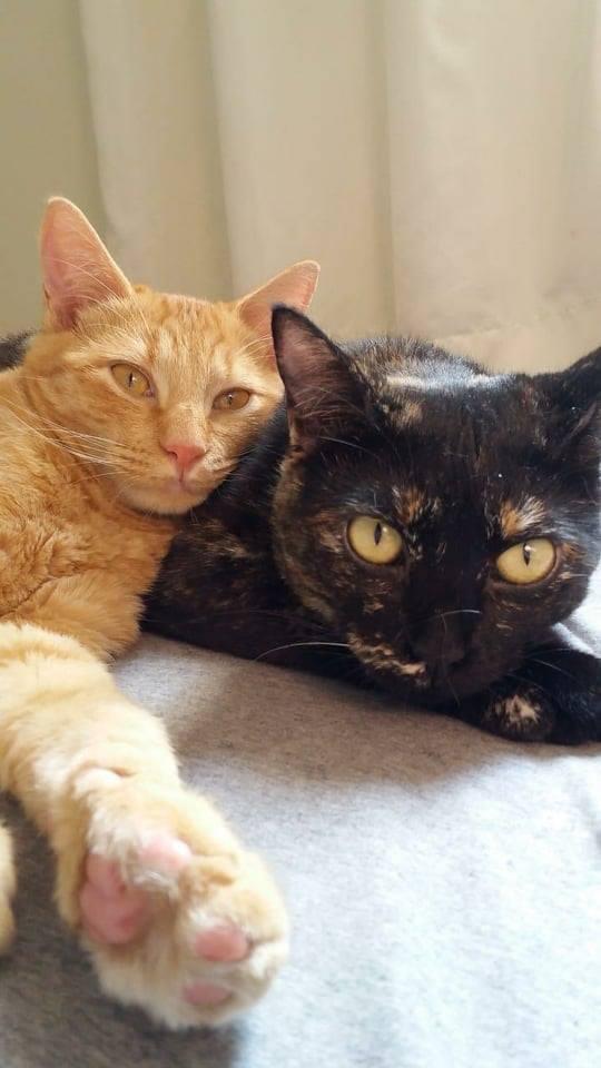 Dois gatinhos deitados. um laranja e um escaminha