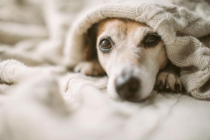 cachorro com diarreia o que pode ser