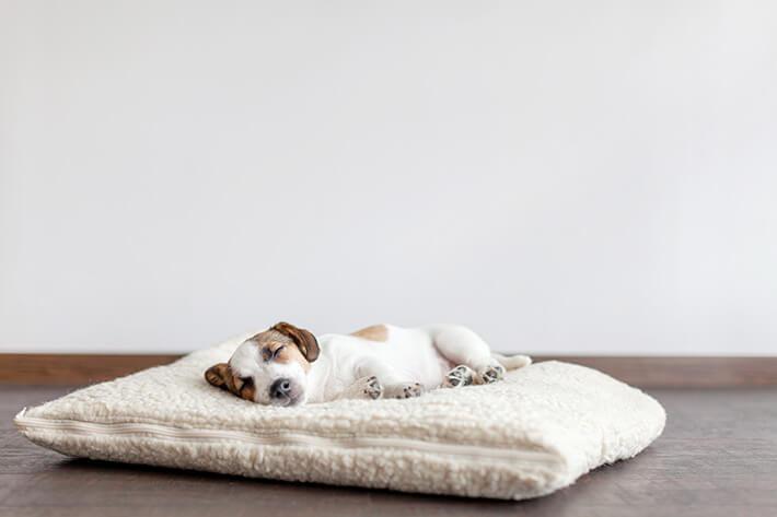 um cachorro filhote deitado em uma almofada branca olhando para a câmera