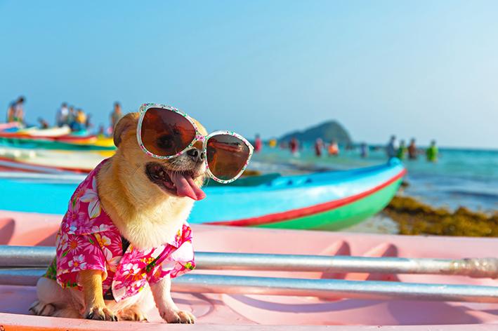 cachorro no calor