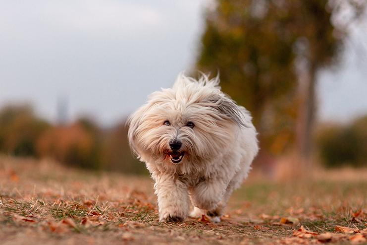 cachorro que não solta pelo correndo
