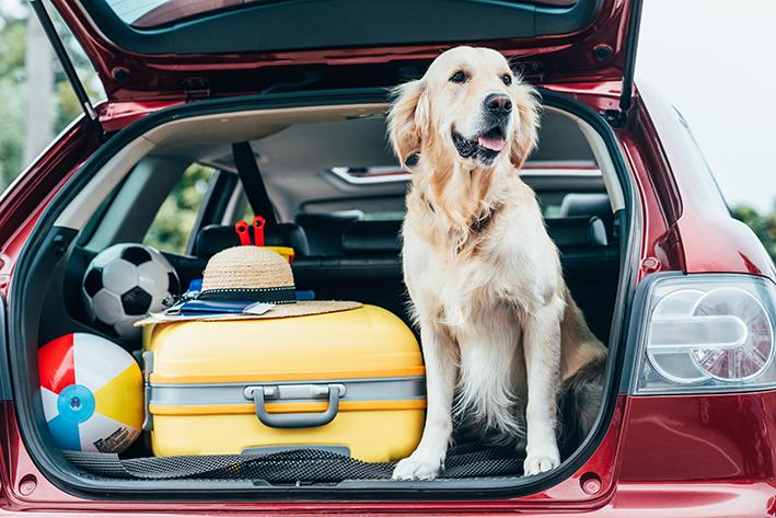 viagem de carro com cachorro