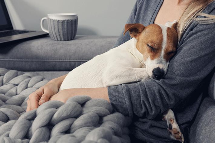 Abraço é uma das respostas de como acalmar um cachorro que tem medo