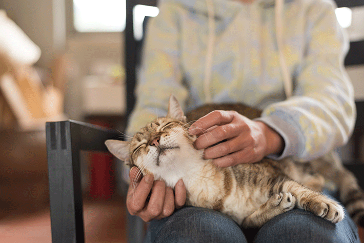 elderly cat receiving affection from the owner on her lap