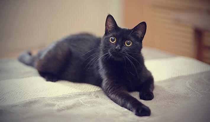 como os gatos enxergam