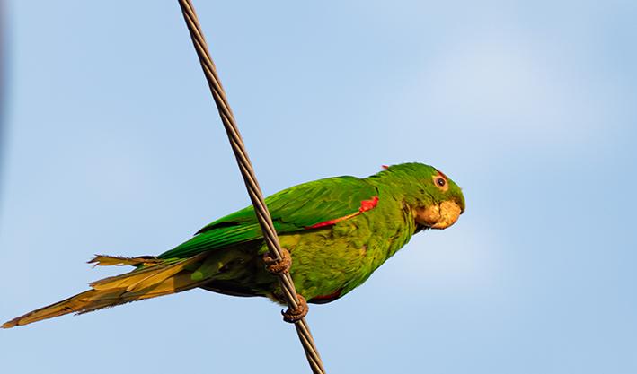 cuidados com pássaros no calor