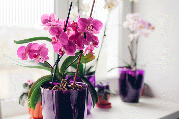 como cuidar de orquídea em apartamento