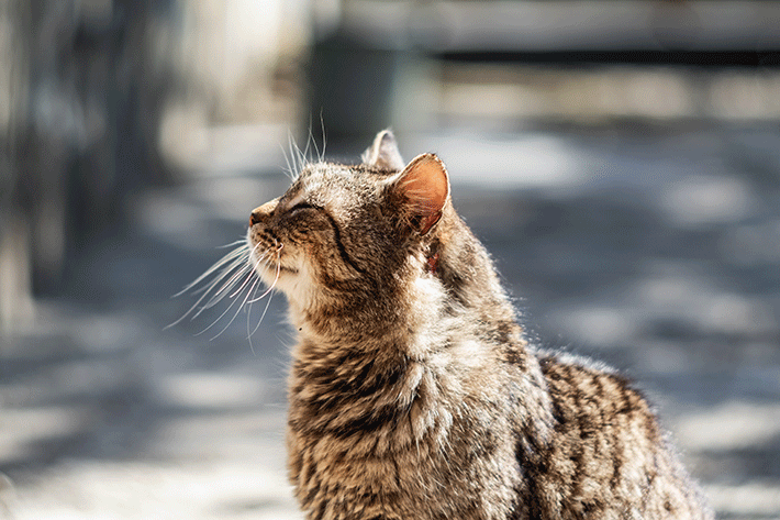 gato idoso olhando para cima sentado de lado