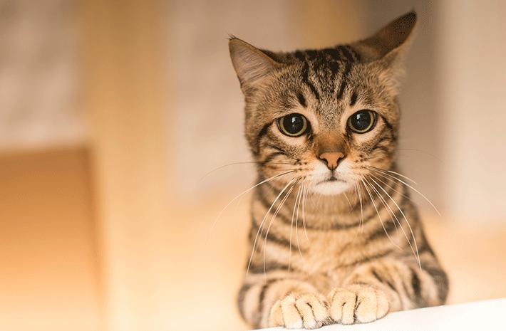 gato não quer comer com semblante triste