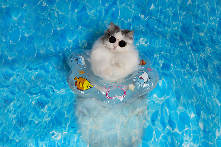 gato no calor