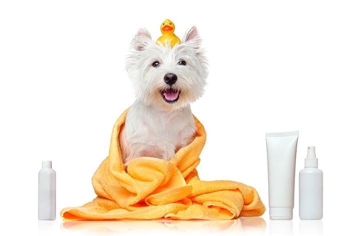 hidratante para cachorro