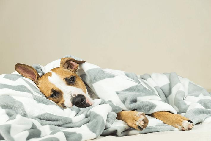 cachorro com diarreia pode estar doente