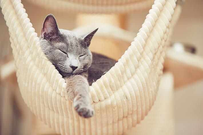por que os gatos ronronam dormindo