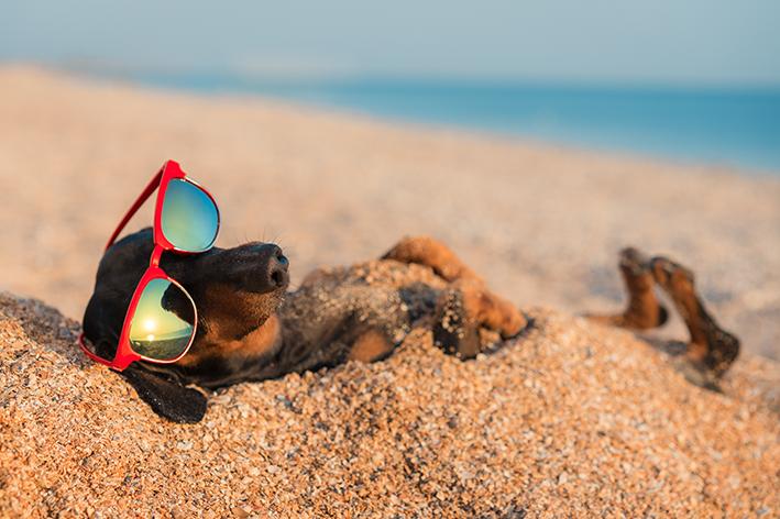 praia com cachorro