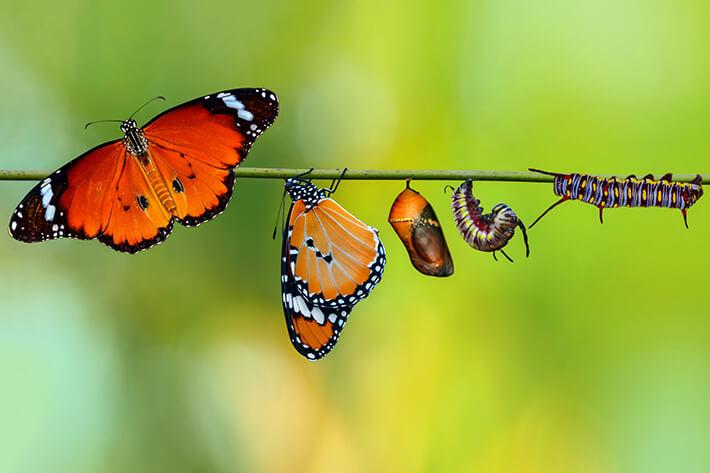 quanto tempo vive uma borboleta
