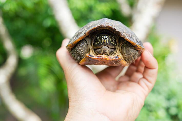 quantos anos vive uma tartaruga bem cuidada