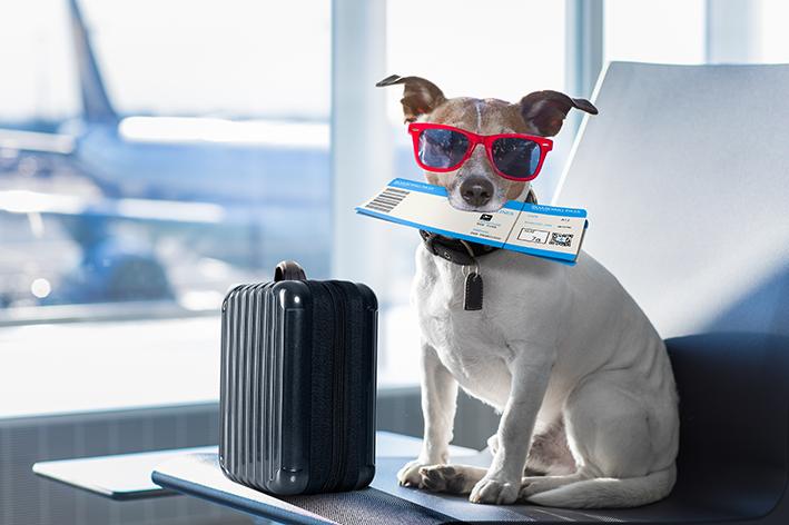 ar de avião com cachorro