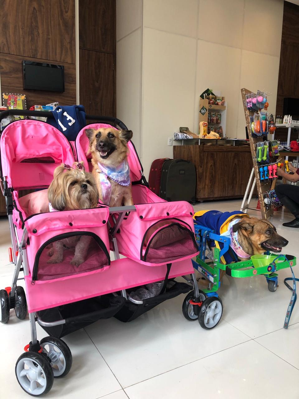 Turma de cães deficientes em seus carrinhos