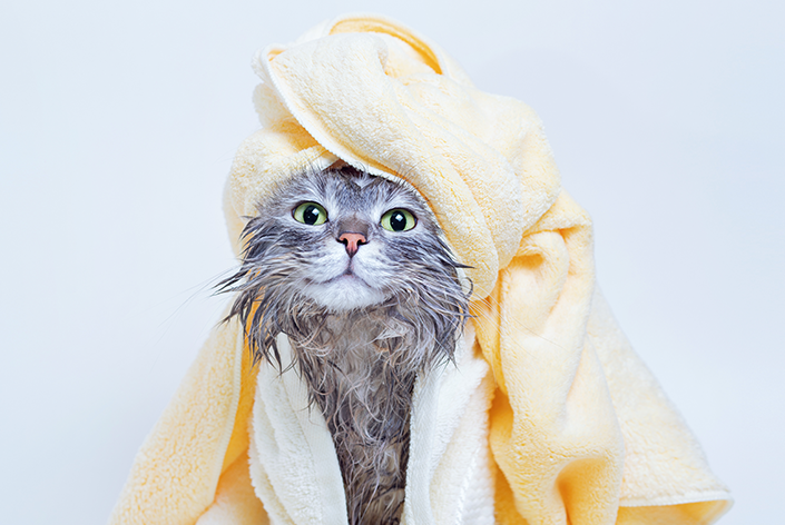 como dar banho em gato