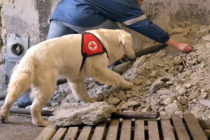 Áreas de atuação do cachorro policial