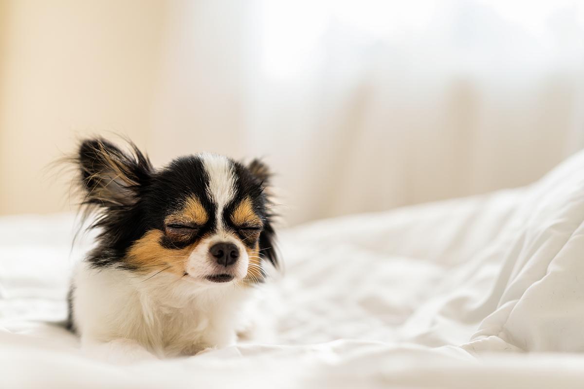 o que um cachorro sonha