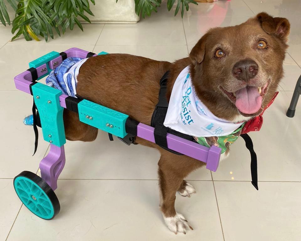 Marrom na cadeira de rodas para cachorro