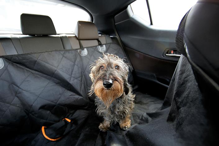Cachorro peludo sentado na capa de carro