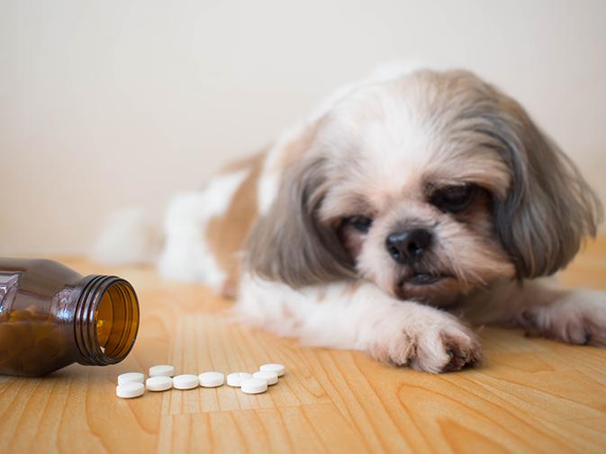 medicamentos sinais choque hipovolêmico em cachorro