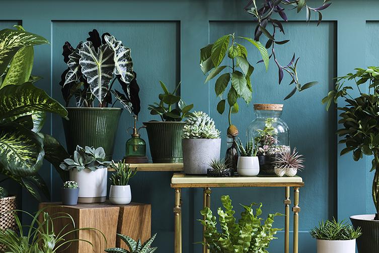 espécies de plantas diferentes para uma urban jungle