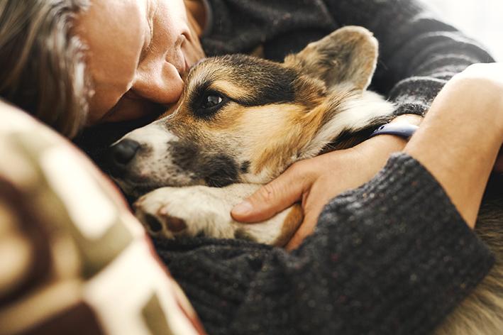 Pessoa abraçando cachorro corgi