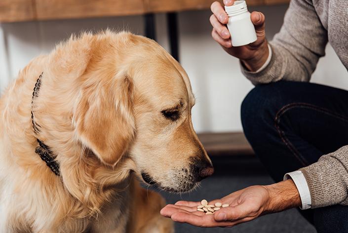 tutora dando comprimido para cachorro