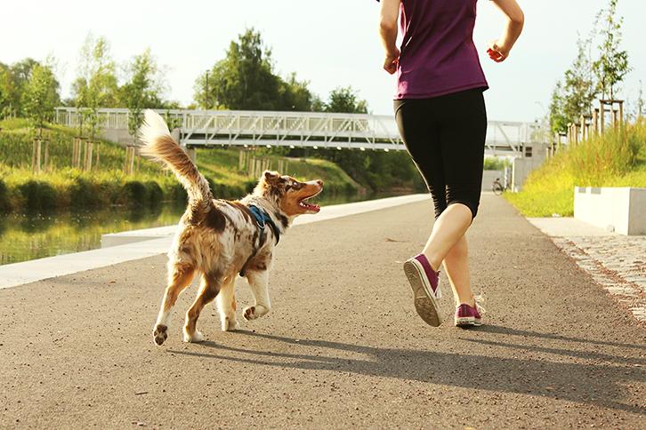 como correr com cachorro