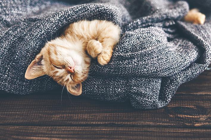 Cuidados com o gato no outono