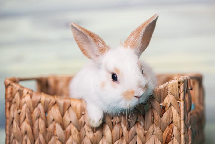 descubra quantos anos vive um coelho