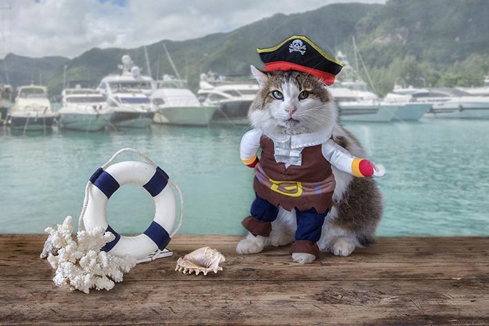 Fantasia de carnaval para gato