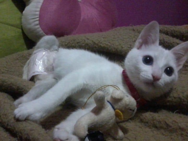 gato deficiente filhote