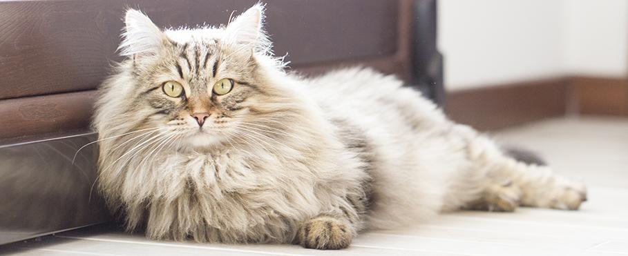 gato macho ou fêmea