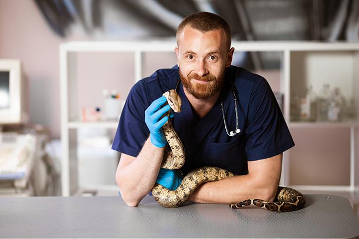 O que faz um médico veterinário