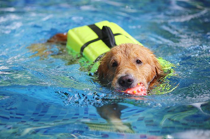 Como garantir a segurança do cachorro na piscina inflável