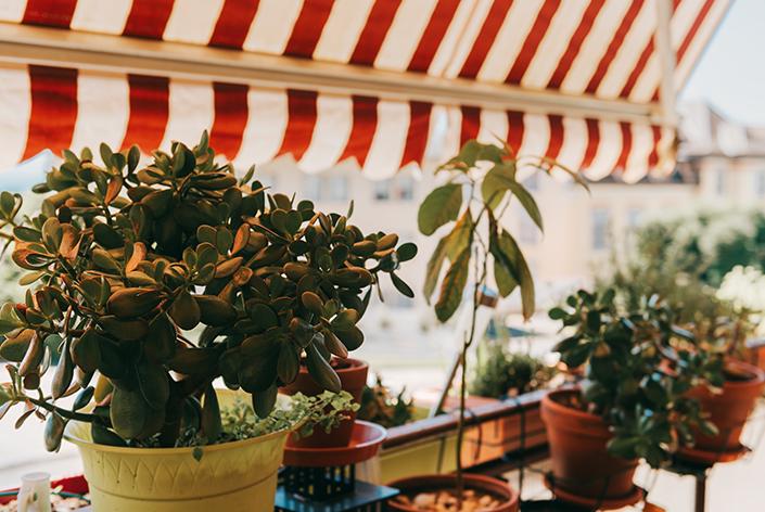 Protegendo plantas no calor
