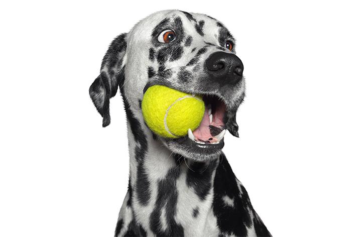 Primeiro de abril: 10 mitos sobre cachorros
