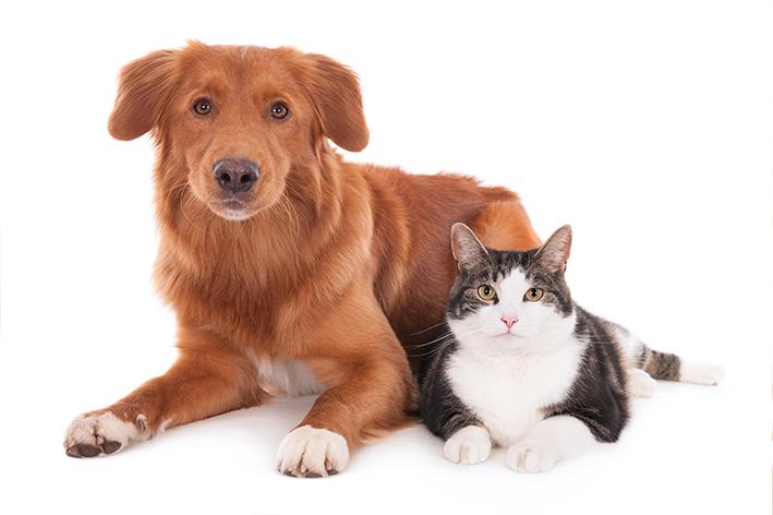 Cachorros e gatos são inimigos naturais