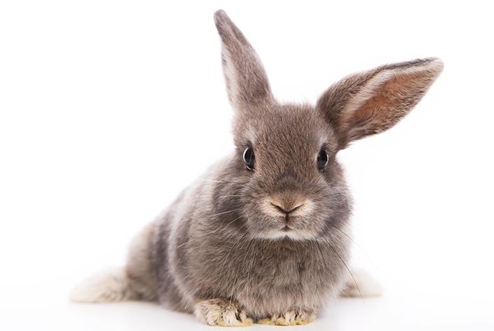 quantos anos vive um coelho