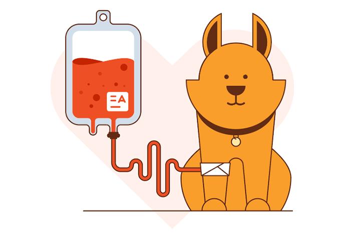 Como ajudar se tornando um doador