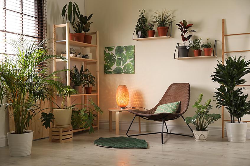 uma urban jungle em casa